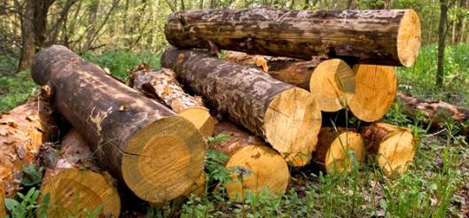 Madeira_troncos