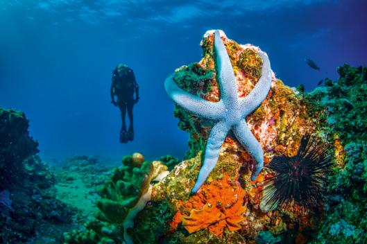 Mocambique_turismo_vida_submarina